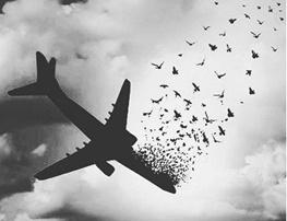 اگر هواپیما ۵۰ متر بالاتر بود قله را رد میکرد / ممکن است جریان هوا هواپیما را به پایین کشانده باشد